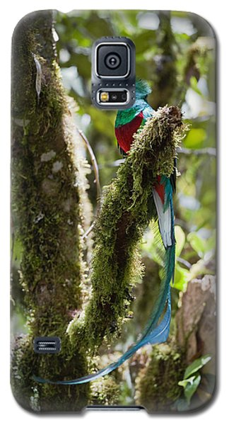 Resplendent Quetzal Male Costa Rica Galaxy S5 Case