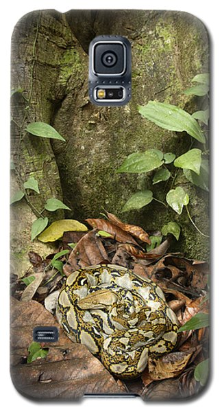 Reticulated Python Galaxy S5 Case