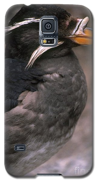 Auklets Galaxy S5 Case - Rhinoceros Auklet by Art Wolfe