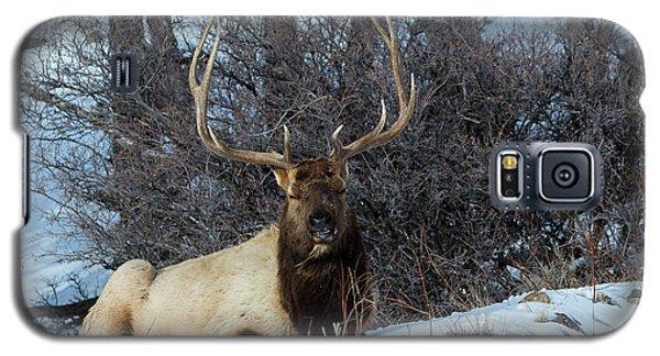 Rocky Mountain Elk Galaxy S5 Case