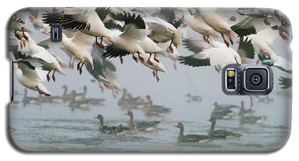 Ross's Goose Galaxy S5 Case by Doug Herr