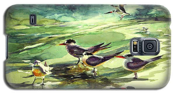 Royal Terns And Black Skimmers Galaxy S5 Case