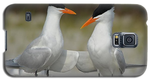 Royal Terns Galaxy S5 Case by James Petersen