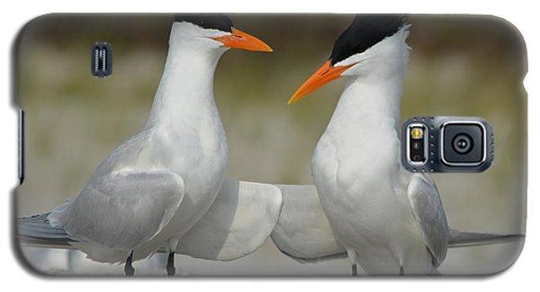 Royal Terns Galaxy S5 Case