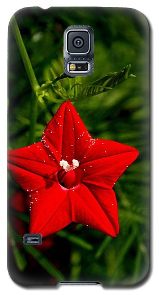 Scarlet Morning Glory Galaxy S5 Case