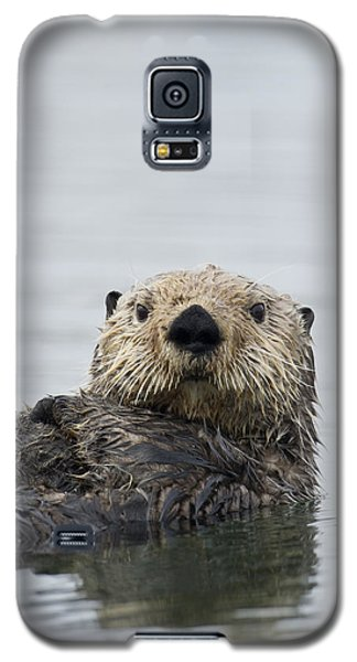 Otter Galaxy S5 Case - Sea Otter Alaska by Michael Quinton
