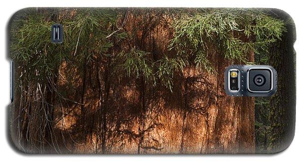 Sequoia Galaxy S5 Case by Muhie Kanawati