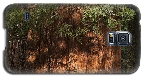 Sequoia Galaxy S5 Case