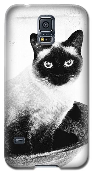 Siamese In A Bowl Galaxy S5 Case