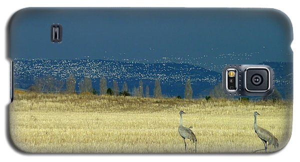 Galaxy S5 Case featuring the photograph Snow Geese Invasion by Cindy Wright
