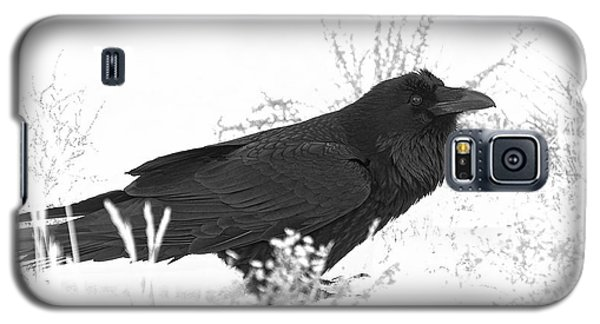 Snow Raven Galaxy S5 Case