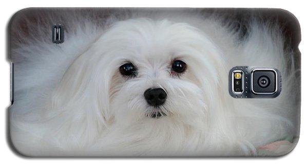 Snowdrop The Maltese Galaxy S5 Case by Morag Bates