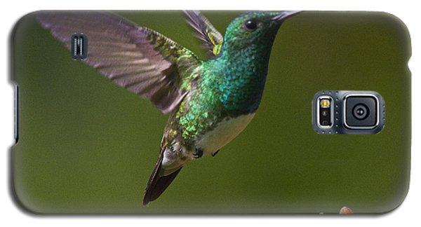 Snowy-bellied Hummingbird Galaxy S5 Case by Heiko Koehrer-Wagner