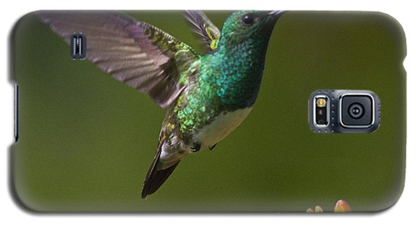 Snowy-bellied Hummingbird Galaxy S5 Case