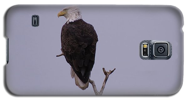 Solo  Bald Eagle Galaxy S5 Case