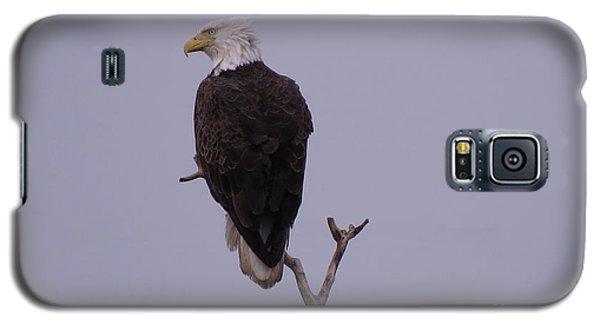 Solo  Bald Eagle Galaxy S5 Case