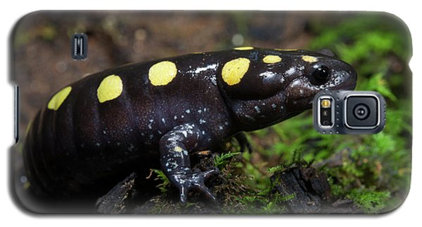 Salamanders Galaxy S5 Case - Spotted Salamander (ambystoma Maculatum by Pete Oxford
