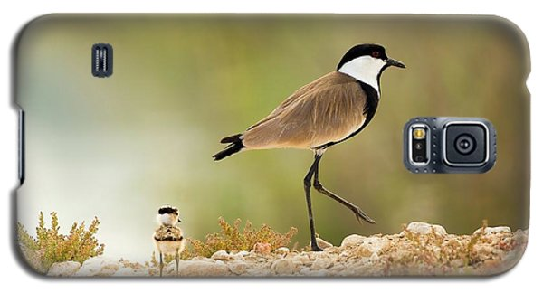 Spur-winged Lapwing Vanellus Spinosus Galaxy S5 Case