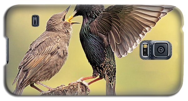 Starlings Galaxy S5 Case by Grant Glendinning