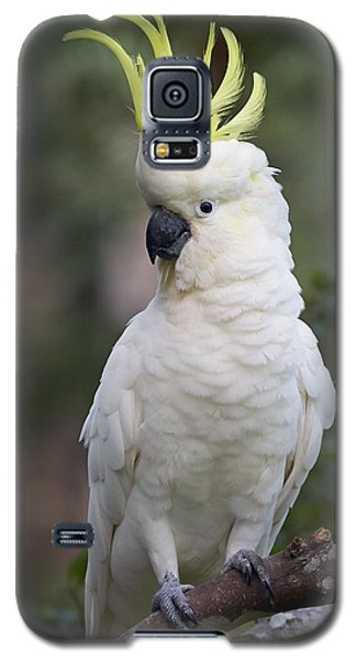 Sulphur-crested Cockatoo Displaying Galaxy S5 Case