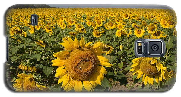 Galaxy S5 Case featuring the photograph Sunflower Fields by Chris Scroggins