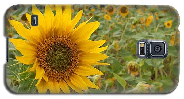 Sun Flower Fields Galaxy S5 Case by Miguel Winterpacht