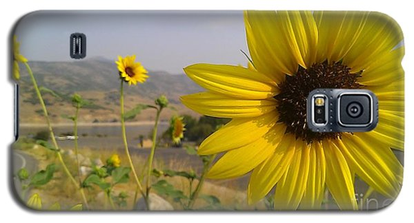 Sunflowers Galaxy S5 Case by Chris Tarpening