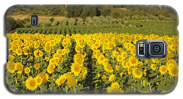 Sunflowers In Arezzo Galaxy S5 Case