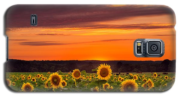 Sunset Over Sunflowers Galaxy S5 Case