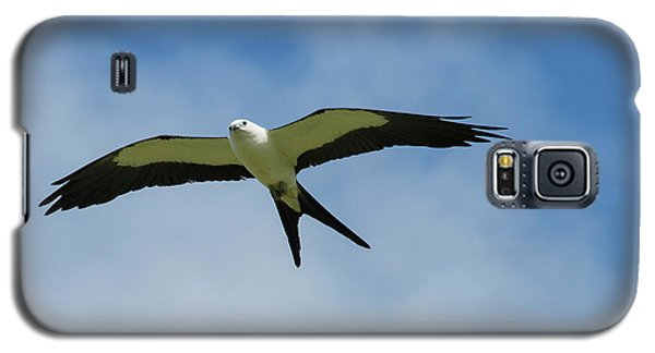 Swallow-tailed Kite In Flight Galaxy S5 Case