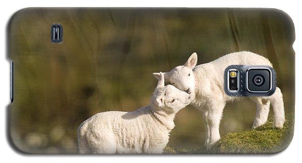 Sheep Galaxy S5 Case - Sweet Little Lambs by Angel Ciesniarska