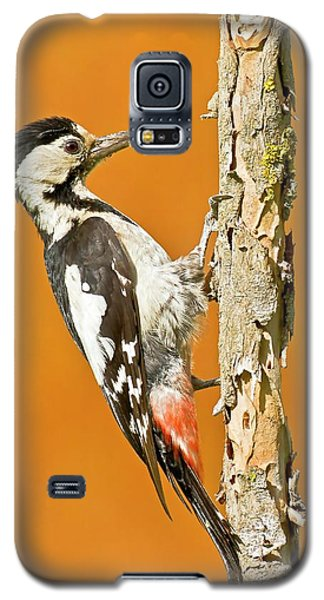 Syrian Woodpecker (dendrocopos Syriacus) Galaxy S5 Case by Photostock-israel