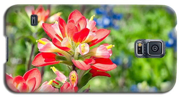 Texas Wildflowers Galaxy S5 Case