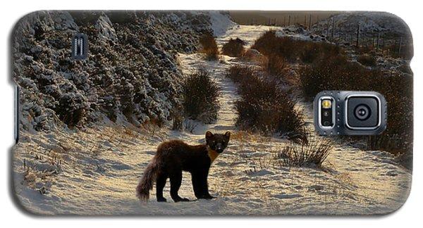 The Pine Marten's Path Galaxy S5 Case