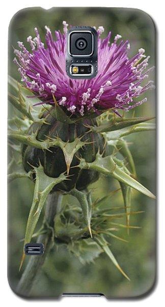 Thorny Beauty  Galaxy S5 Case