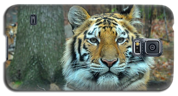 Tiger Bronx Zoo Galaxy S5 Case