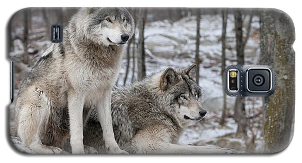 Timber Wolf Pair In Forest Galaxy S5 Case by Wolves Only