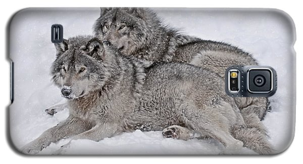 Timber Wolf Pair Galaxy S5 Case