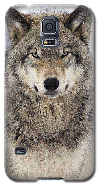 Timber Wolf Portrait Galaxy S5 Case