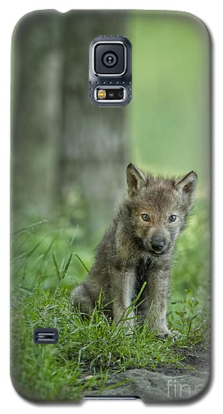 Timber Wolf Pup Galaxy S5 Case
