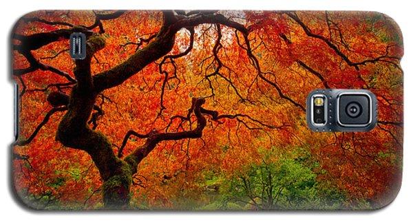 Tree Fire Galaxy S5 Case by Darren  White