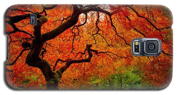Tree Fire Galaxy S5 Case