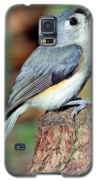 Tufted Titmouse Galaxy S5 Case