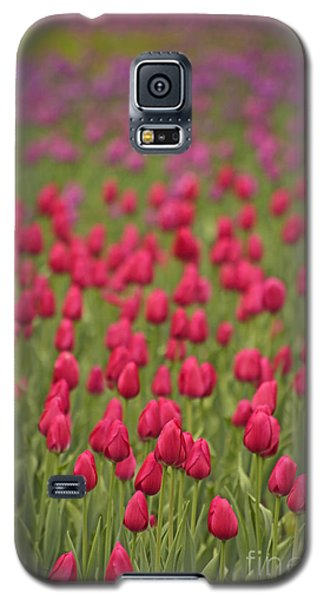 Tulip Beds Forever Galaxy S5 Case