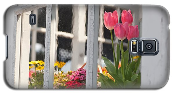 Tulips Of Greenhouse Galaxy S5 Case by Aiolos Greek Collections
