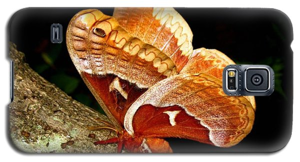 Galaxy S5 Case featuring the photograph Tuliptree Silkmoth by William Tanneberger
