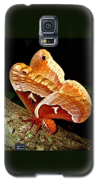 Tuliptree Silkmoth Galaxy S5 Case