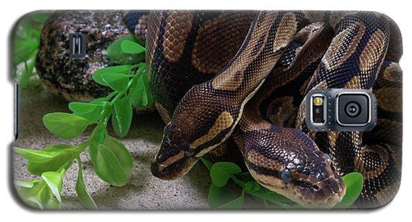 Two Burmese Pythons Python Bivittatus Galaxy S5 Case