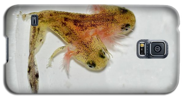 Salamanders Galaxy S5 Case - Two-headed Salamander Tadpole by Photostock-israel