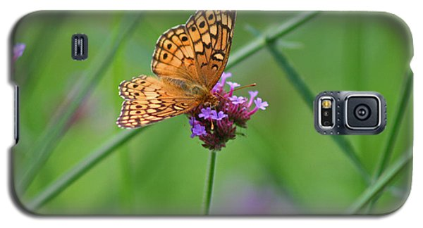 Variegated Fritillary Butterfly In Field Galaxy S5 Case